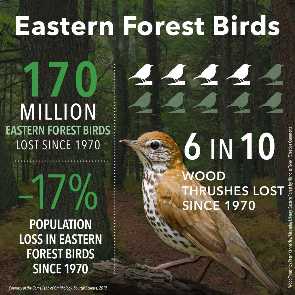 Bird population decline