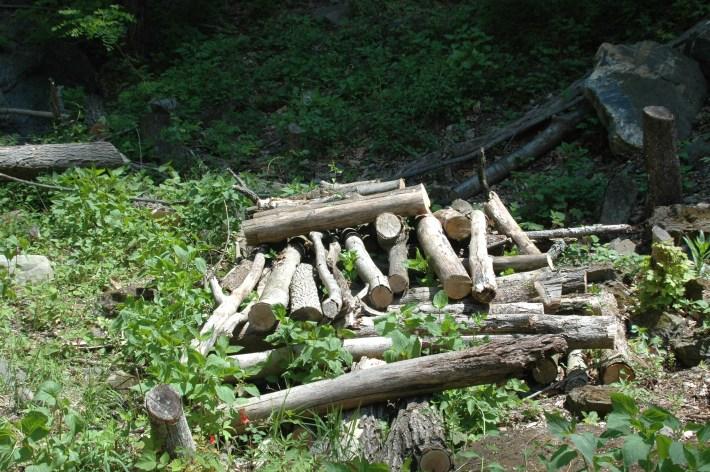 logs in quarry